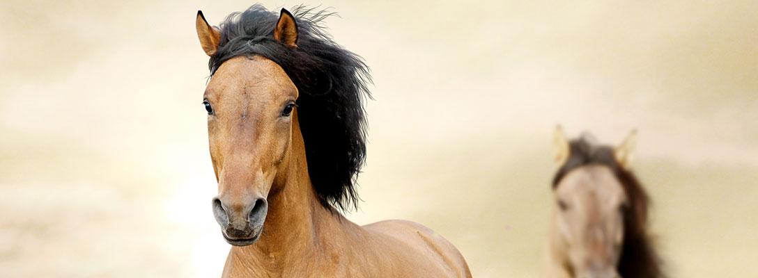 Pferde Alle Wichtigen Infos